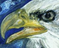 Bald_headed_Eagle