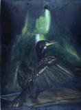 green-light-cormorant