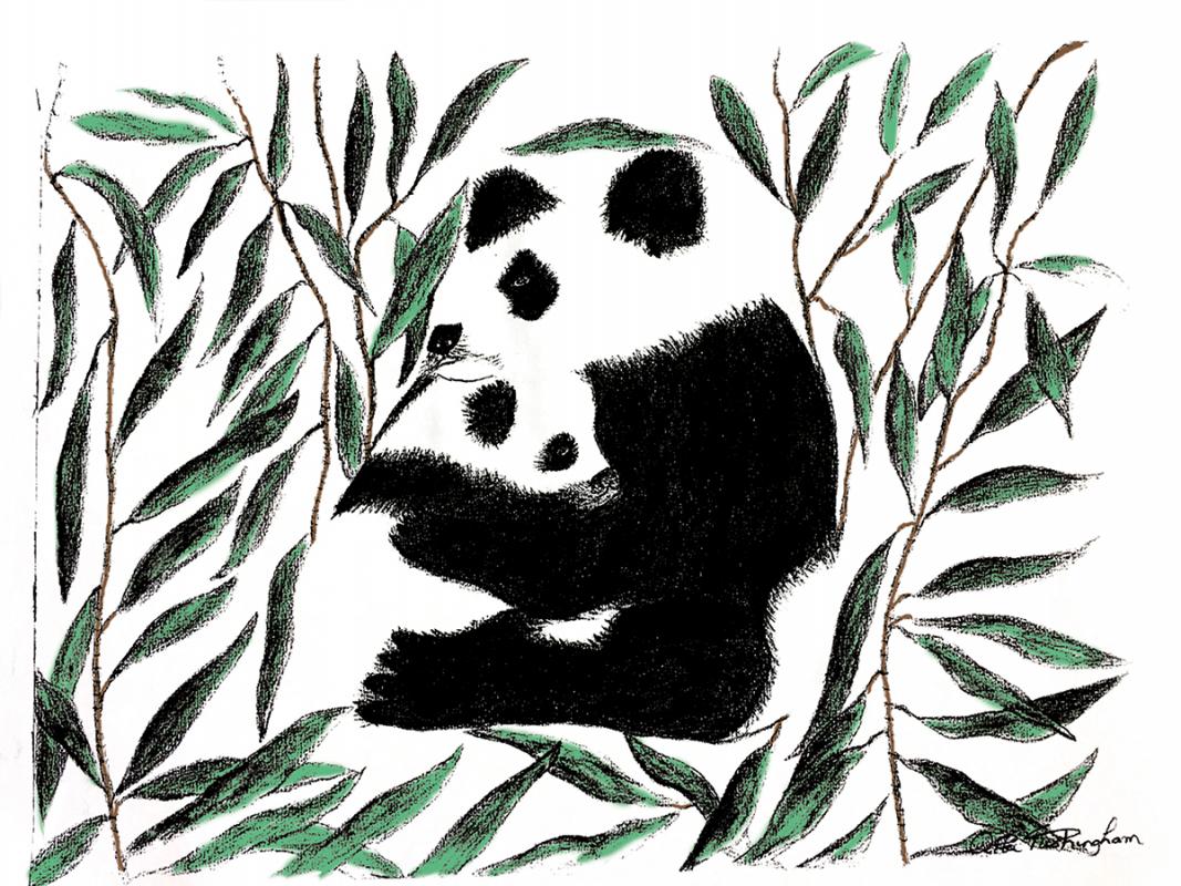 Rita-panda-col